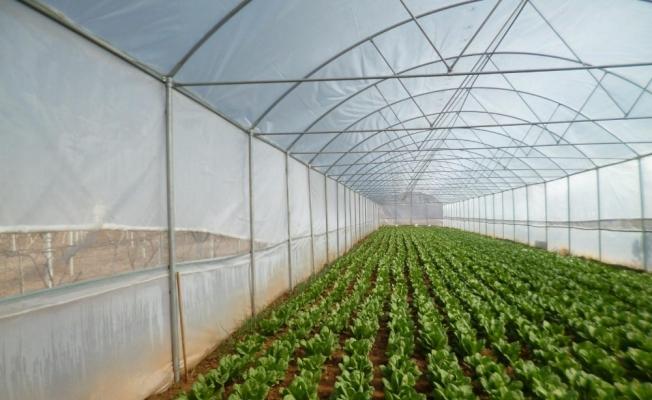 Manisa Büyükşehir'den çiftçilere sera desteği