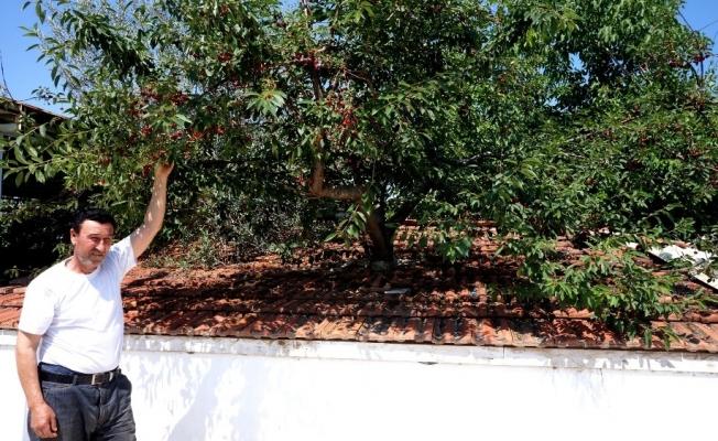Kesmeye kıyamadığı ağaçlar deponun içinde kaldı
