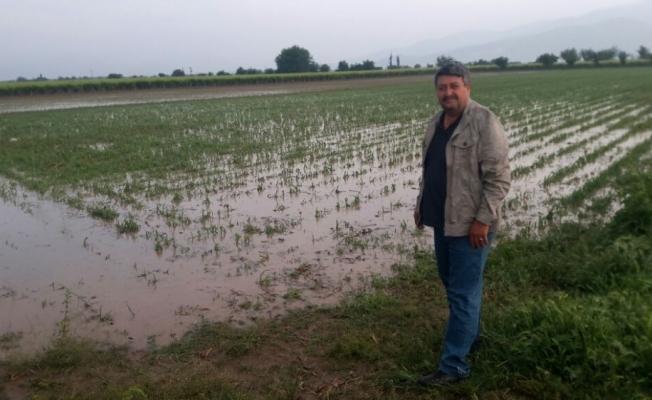 Manisa'da dolu yağışı üzüm bağlarını vurdu