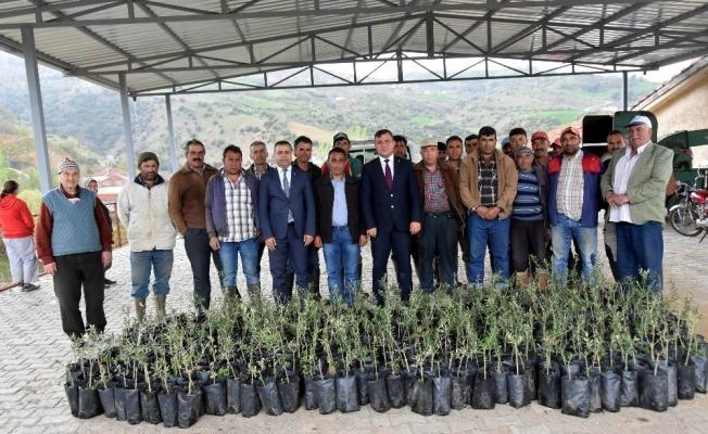 Salihlili çiftçiye bin 300 adet zeytin fidanı