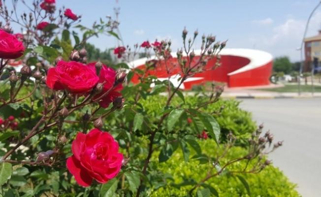 Yaz çiçekleri toprakla buluştu