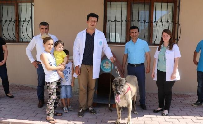 İşkenceye maruz kalan 'Masum' yeni ailesine kavuştu