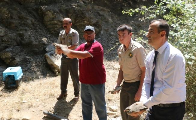 Manisa'da 4 bin keklik doğayla buluştu
