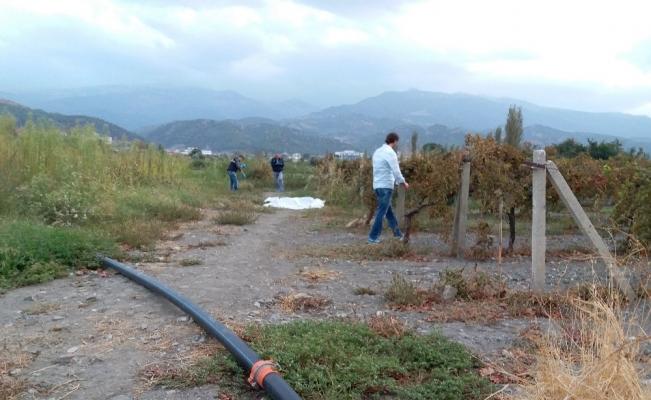 Manisa'da üzüm bağlarında cinayet