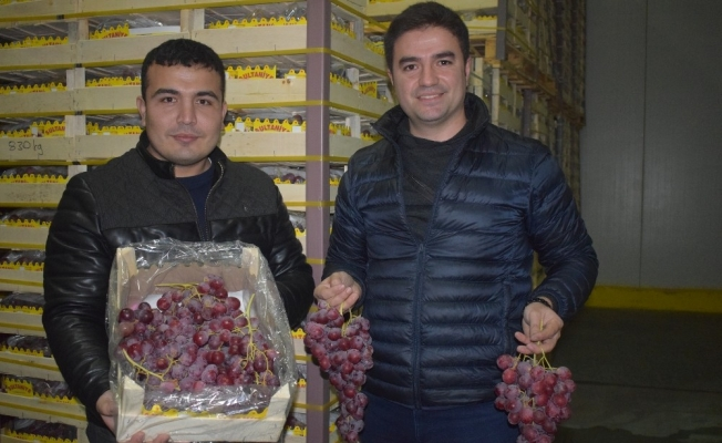 Yaş üzüm ihracatında son tır Alaşehir'den yola çıktı
