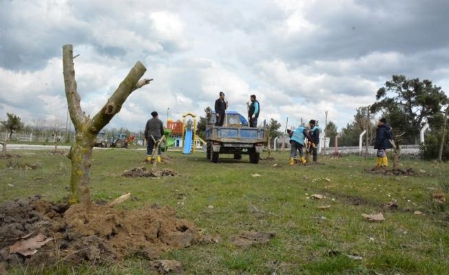 Yunusemre'de ağaçlandırma çalışmaları sürüyor