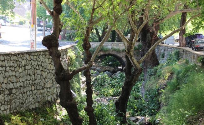 Anıtlar Kurulundan izin çıktı, asırlık çınarlar bakıma alındı