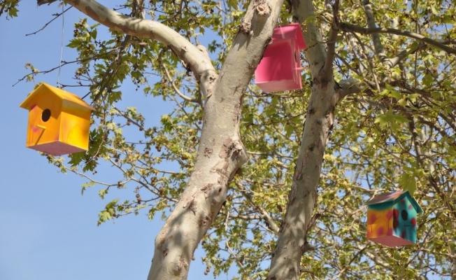 Somalı öğrencilerden 'Kuş Evi' projesi
