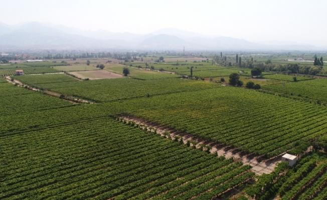 Tarım arazileri Türkiye'de azaldı Manisa'da arttı