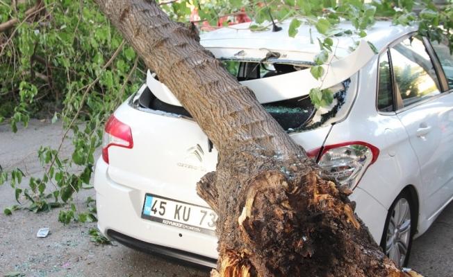 Çürüyen ağacın dalı otomobillerin üzerine devrildi