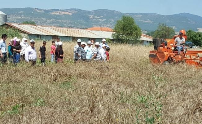 Gördes'de yerel buğday projesi kapsamında hasat yapıldı