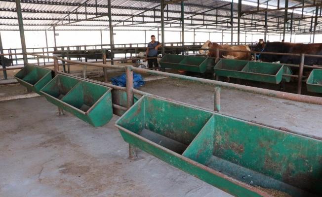 Manisa hayvan pazarında padoklar boş kaldı
