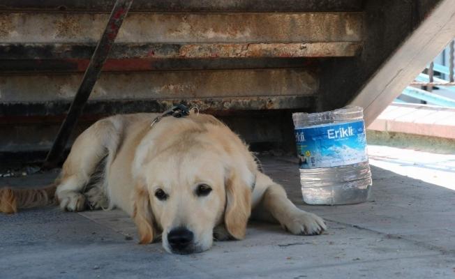 Sahibini bekleyen köpek merdiven altından ayrılmıyor