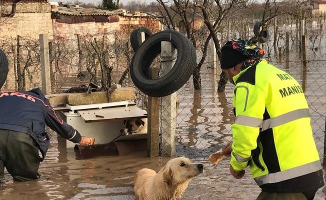 AFAD ve MAT ekipleri selde mahsur kalan hayvanları unutmadı