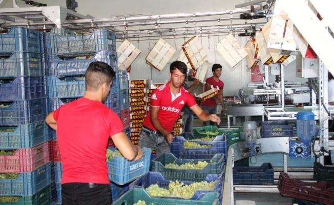 Alaşehir'den 500 milyon dolarlık ihracat