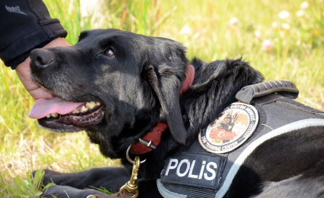Suçluların korkulu rüyası 'kahraman köpekler'