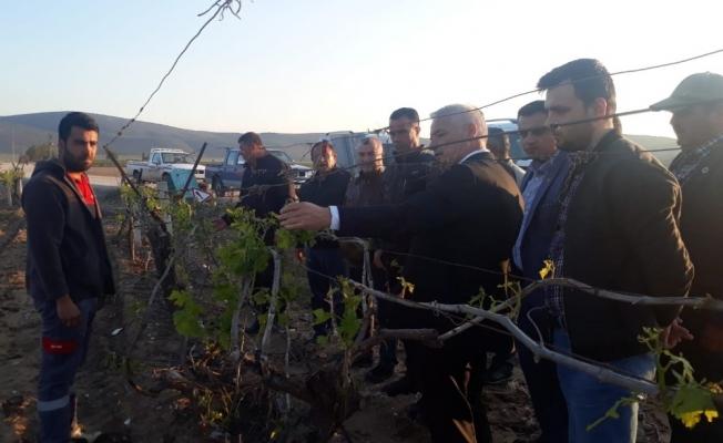 Başkan Bilgin dolunun zarar verdiği tarım alanlarını inceledi