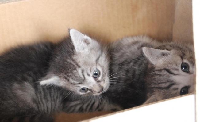 Çatı aralığında doğan kedi yavrularını itfaiye kurtardı