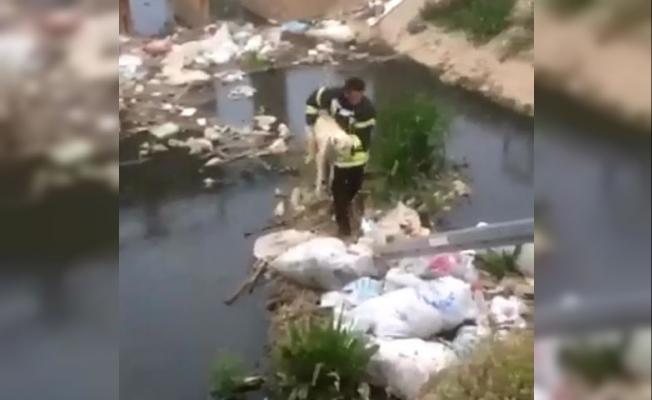 Kanalda mahsur kalan köpeğe itfaiye kurtardı