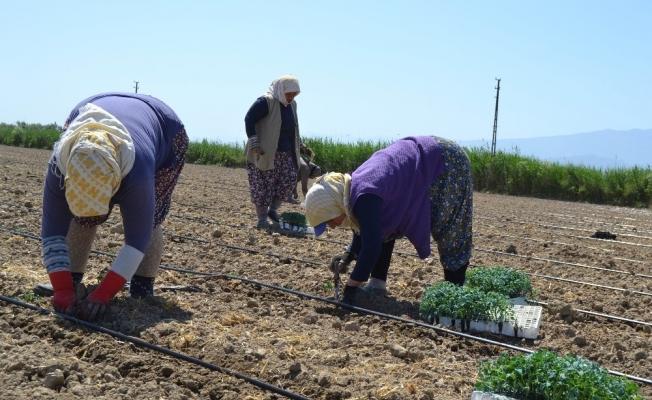 Salihli'de işçi ve biçerdöver fiyatları belirlendi