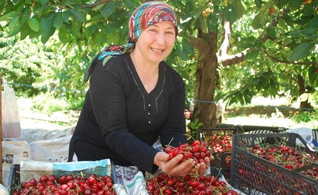 Tescilli Salihli Kirazı'nda hasat sevinci