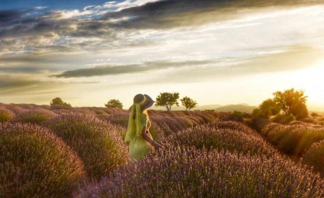 Manisalı fotoğrafçılar lavanta bahçelerini fotoğrafladı