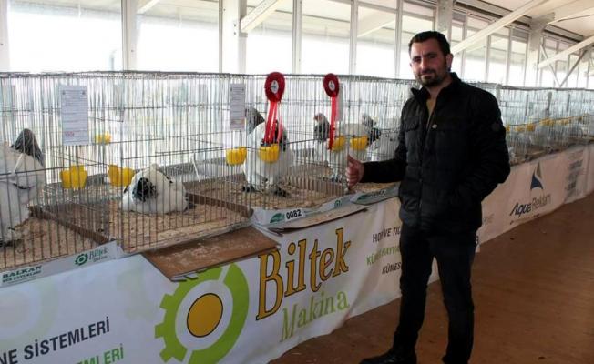 Bu tavuklar 5 bin lira