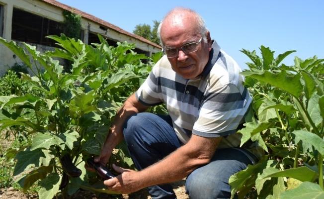 Manisa'dan Türkiye'ye yerel tohum