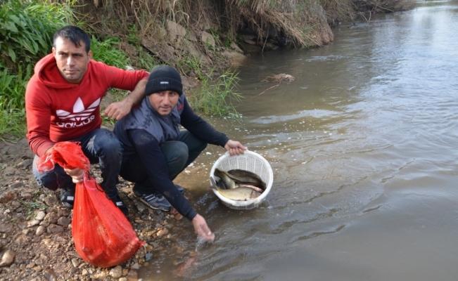 Gediz'de su seviyesi düştü elle balık avladılar