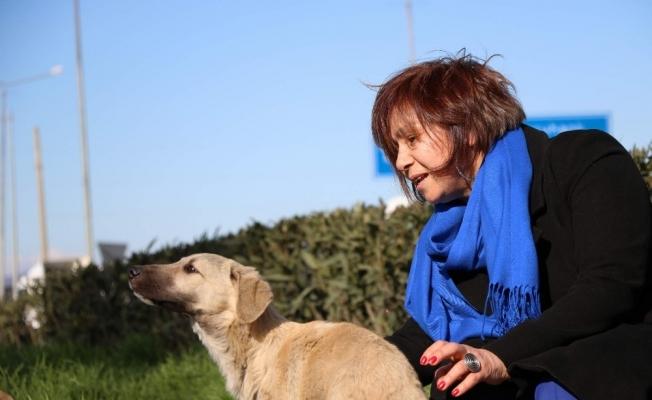 Emeklilik hayatını öğrencilerine ve sokak hayvanlarına adadı