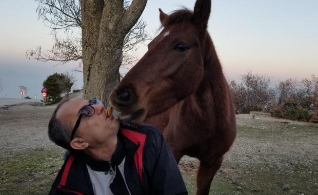 Yabani yılkı atlarını ağzıyla besledi