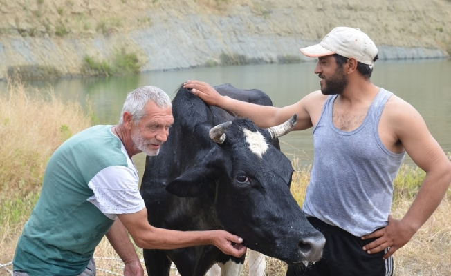 İtfaiyeden nefes kesen inek kurtarma operasyonu
