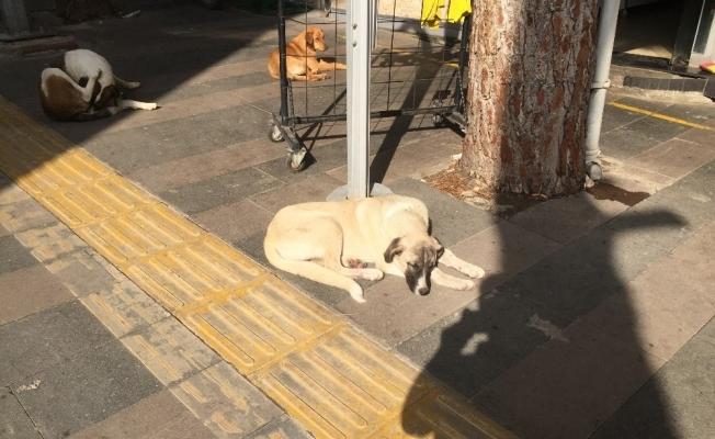 Köpeği döven adama barınakta hayvan bakma cezası