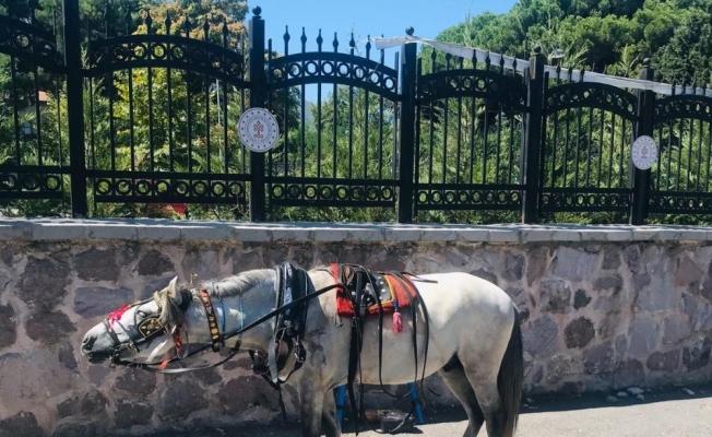 Trafiğe çıkması yasaklanan at arabaları zabıta tarafından toplandı