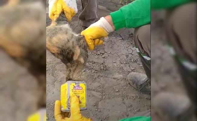 Kafası teneke kutuya sıkışan kediyi temizlik işçisi kurtardı
