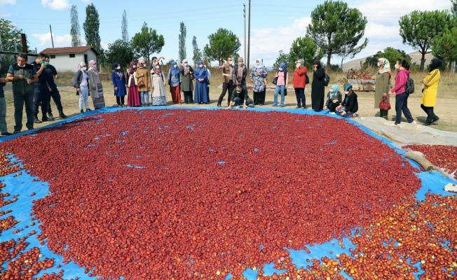 'Ölümsüzlük Meyvesi'nde hasat sevinci