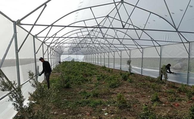 Büyükşehirle seracılık gelişiyor, üreticiler kazanıyor