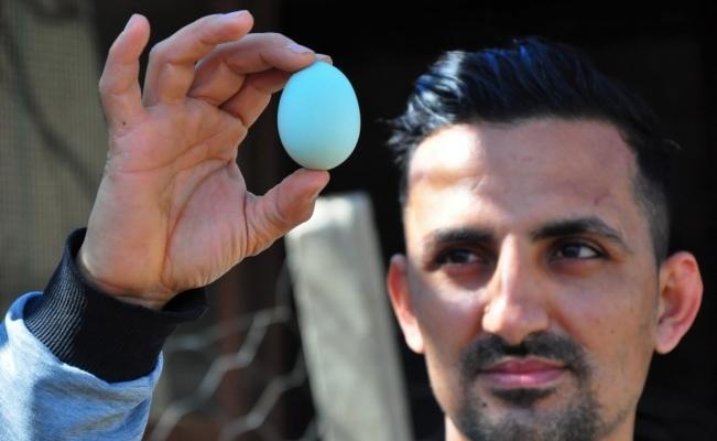 Amerika'dan getirttiği mavi yumurtalar hayatını değiştirdi