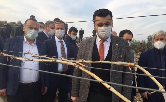 AK Parti'li Akkal Alaşehir'de dondan zarar gören bağlarda incelemede bulundu