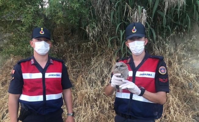 Yaralı kukumav baykuş tedavi altına alındı