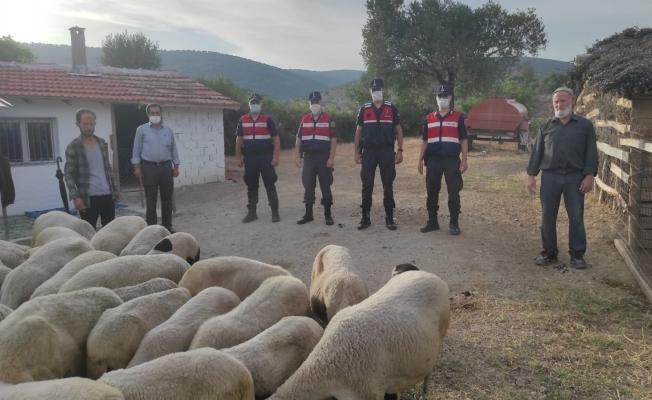 Ağıldan kaçan koyunları jandarma buldu