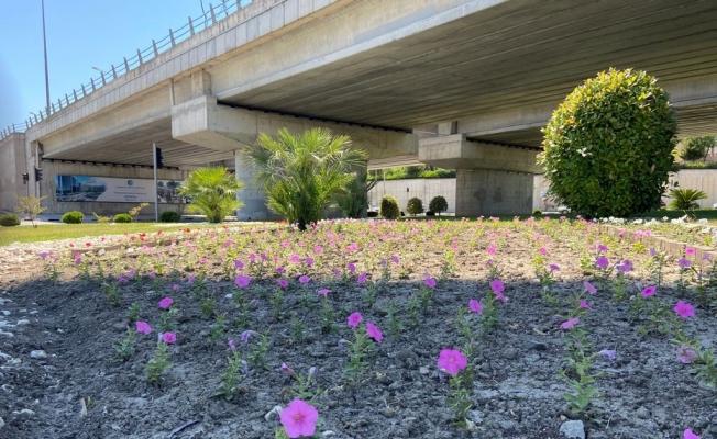 Büyükşehirin ürettiği çiçekler Manisa'yı süslüyor
