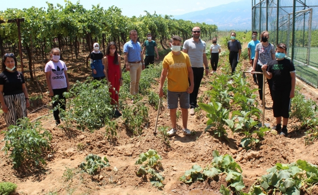 Okul bahçesinde sebze yetiştirip okula gelir sağlayacaklar
