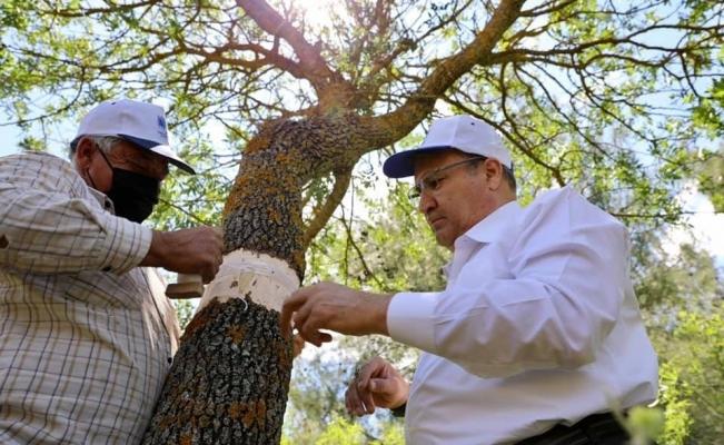 Yunusemre'de 75 bin göz aşı çalışması tamamlandı