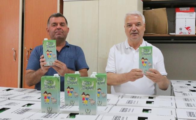 Saruhanlı Belediyesinin 'Süt Kuzusu' Projesi başladı