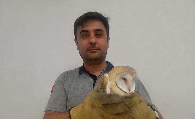 Yaralı baykuşu hayvansever kurtardı