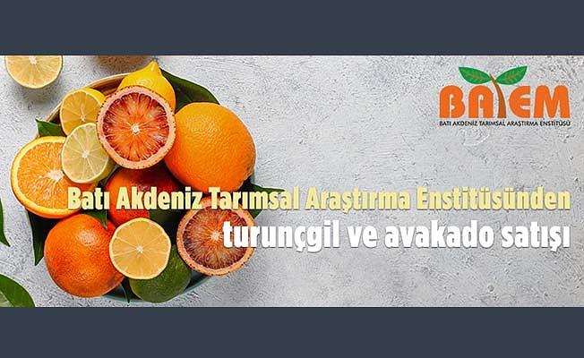 Batı Akdeniz Tarımsal Araştırma Enstitüsü Müdürlüğünden meyve satışı