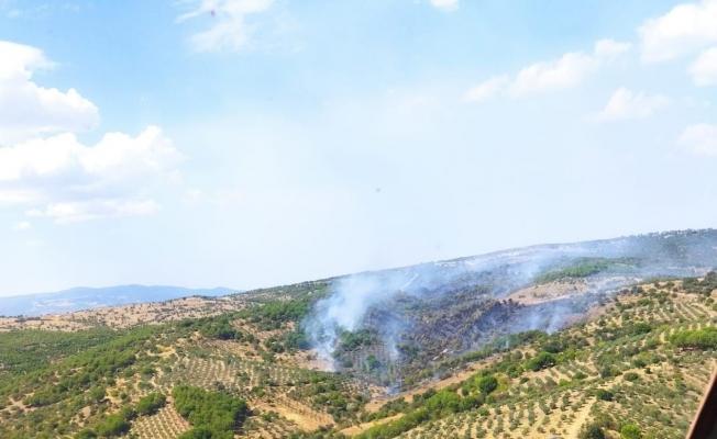 Manisa'da çıkan orman yangını kontrol altında