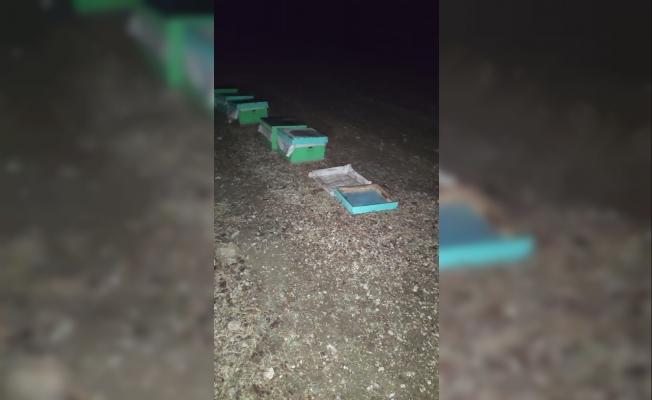 Arı kovanı hırsızları fotokapanla yakalandı
