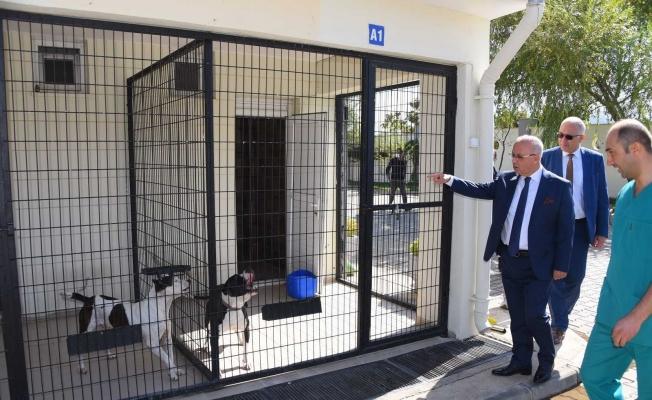 Başkan Kayda'dan sokak hayvanlarına yakın ilgi